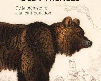 Image illustrant l'article OURS de La Cliothèque