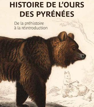 Histoire de l'ours des Pyrénées, De la préhistoire à la réintroduction